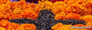 Cempasuchil Orange Mexican Flowers