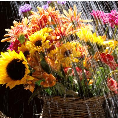 Les tradicions del primer dia d'escola arreu del món inlingua Andorra blogpost flowers with rain